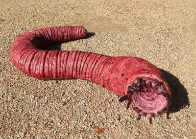 worm05